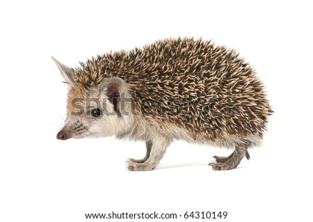 porcupine on a seemless backround - stock photo