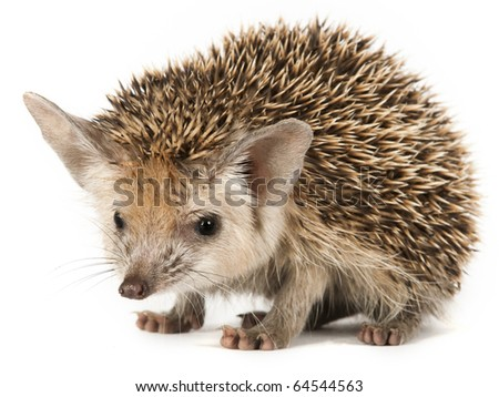 porcupine on a seemless backround
