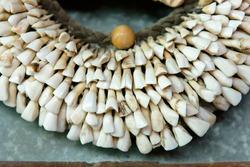 Pork teeth