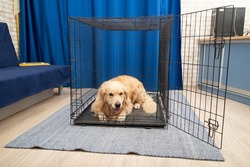 Portable cage for medium and large-sized dogs.