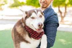 Portait of a husky dog wearing a bandana looking happy while being carried by his male dog owner in the park
