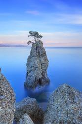 Portofino natural regional park. Lonely pine tree rock and coastal cliff beach. Long exposure photography. Liguria, Italy