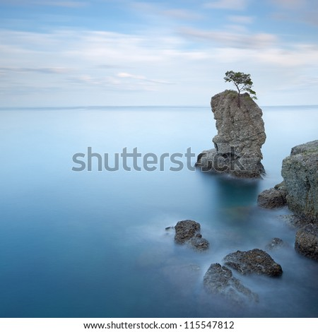 Portofino natural regional park. Lonely pine tree rock and coastal cliff beach. Long exposure photography. Liguria, Italy