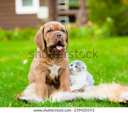Portrait Bordeaux puppy dog and newborn kitten sitting together on green grass