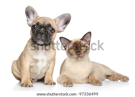 Portrait Cat and dog on a white background