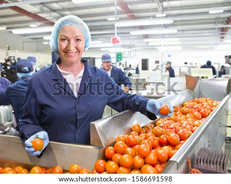 Portrait confident quality control worker sorting ripe red tomatoes on production line in food processing plant