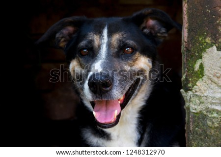 portrait mongrel stray dog on dark background #1248312970