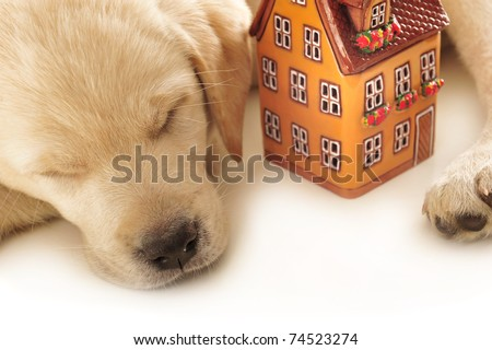 Portrait of a adorable labrador puppy, laying on white table with house. Isolated on white background. House insurance concept - stock photo