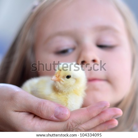 Portrait of a baby chick being held by a girl