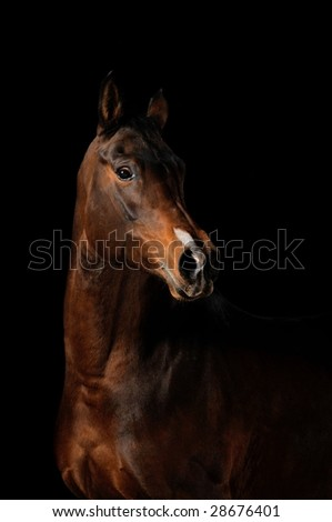 Portrait of a bay horse on a black background