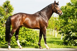 portrait of a bay tribal stallion against a background of decorative green trees
