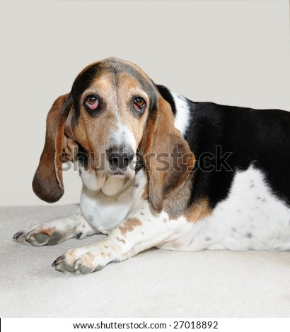Pin Dog Ears Eyes Grass Grounded Image Photo Picture Puppy ...