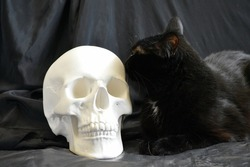 Portrait of a beautiful black cat next to a plaster sculpture in the form of a human skull on a black background.