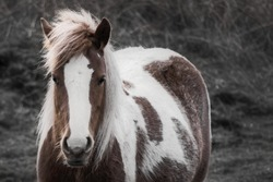 Portrait of a beautiful brown white horse