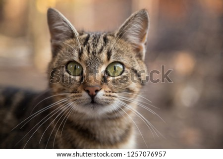 Portrait of a beautiful cat #1257076957