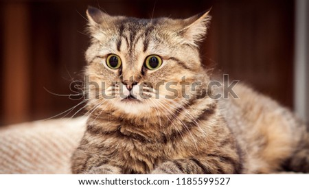 portrait of a beautiful cat, Beautiful cat close up, Beautiful cat at home. Domestic animal, Cute funny cat playing #1185599527