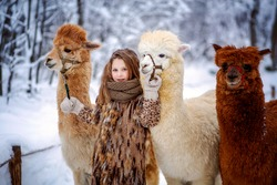 Portrait of a beautiful girl in a fur coat next to three alpacas (llamas) against the background of a winter landscape. Selective focus of the image.