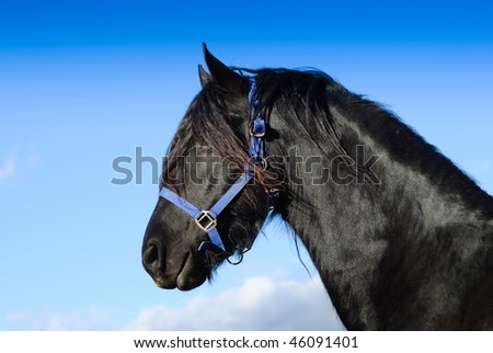 Portrait of a beautiful horse.