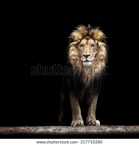 stock photo portrait of a beautiful lion in the dark 317710280 - Каталог — Фотообои «Животные»