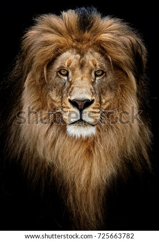 Portrait of a Beautiful lion, lion in dark #725663782