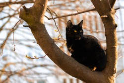 Portrait of a beautiful stray cat on a tree
