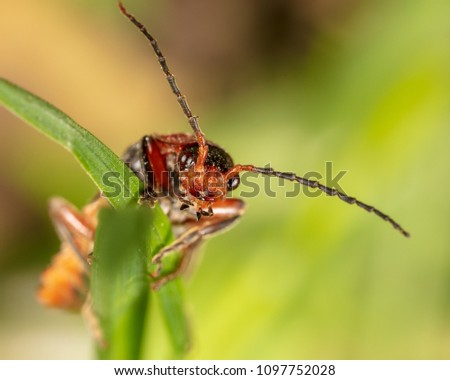 Portrait of a beetle in nature #1097752028