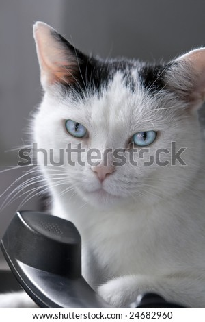 Portrait of a black and white male cat, lying on a land-line phone. Shallow DOF. Could serve as a concept for communication.