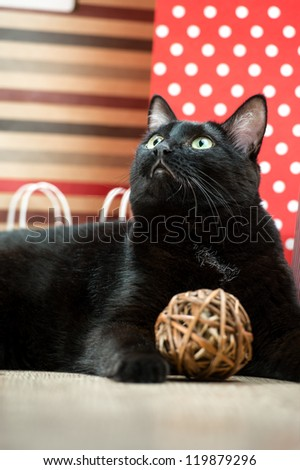 Portrait of a black cat pet lying near the red shopping paper bags