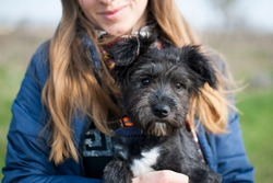 portrait of a black puppy. woman holding the animal in her arms. Portrait of a young black dog close-up. Charming dog posing, smiling. concepts of friendship, care. domestic animal. girl and puppy