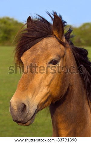 Portrait of a brown horse outdoors with green nature background.
