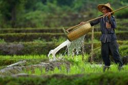 Portrait of a Burmese farmer watering plant