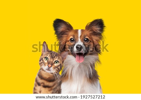 portrait of a cat and dog in front of bright yellow background