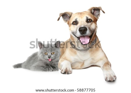 Portrait of a cat and dog. Isolated on a white background
