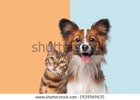 portrait of a cat and dog looking at camera in front of trendy duo tone background