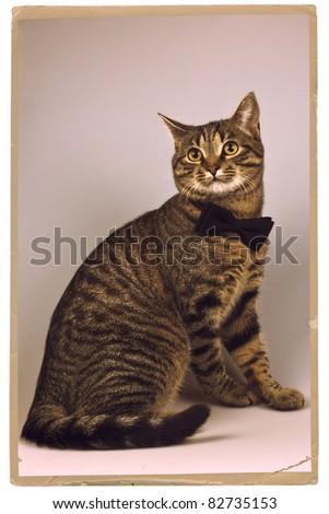 Portrait of a cat in a black tie
