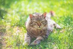 Portrait of a cat lying in a garden on the grass in spring