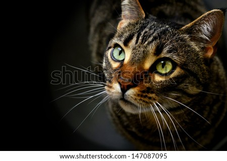 Portrait of a cat on black