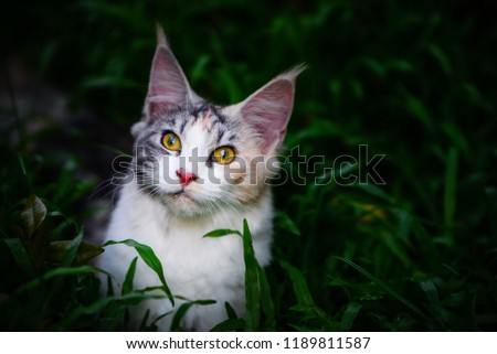 free photos three color cat avopix com
