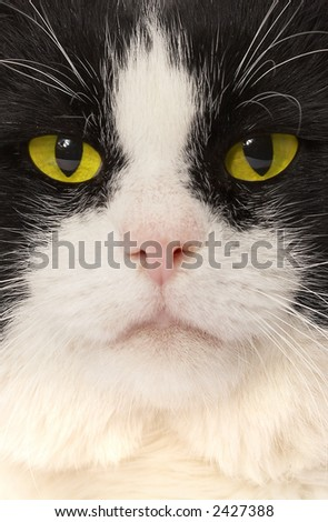 Portrait of a cat with yellow eyes