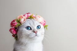 Portrait of a charming white cat wearing a crown of pink flowers on a gray background