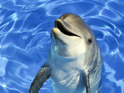 Portrait of a common dolphin