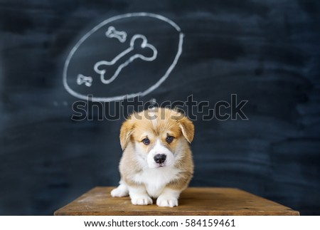 Portrait of a corgi puppy against the background of the beautiful drawing in studio. The puppy dreams of a tasty bone.