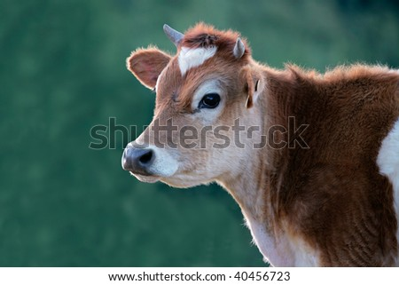 Portrait of a cow against a green background