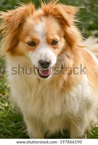 Portrait of a cute cross-breed dog.