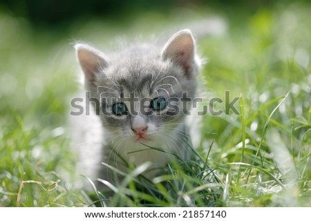 Portrait of a cute little cat with blue eyes in a green grass