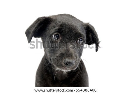 Portrait of a cute Mixed breed dog puppy, studio shot, isolated on white. #554388400