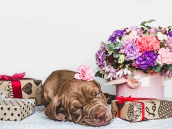 Portrait of a cute puppy, bright bouquet of flowers and festive box. Close-up, isolated background. Studio photo, white color. Concept of care, education, obedience training and raising of animals