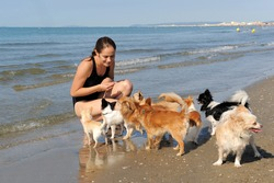 portrait of a cute purebred  chihuahuas and young woman on the beach