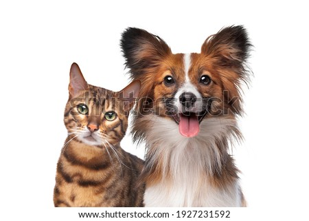 portrait of a dog and a cat looking at the camera in front of a white background