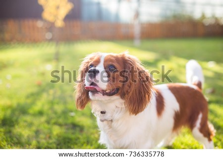 Portrait of a dog on a background of green grass